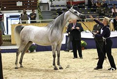 Amurath Mofeedah Nationales Championat Aachen September 2011