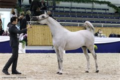 Amurath Mofeedah Nationales Championat Aachen September 2014
