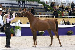 Angel Afrikhan Queen Nationales Championat Aachen 2012