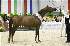 Angel Afrikhan Queen Nationales Championat Aachen 2013