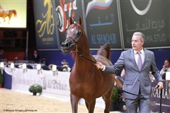 Angel Afrikhan Queen Nationales Championat Aachen 2017